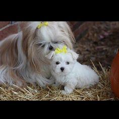 Dixie and Daisy