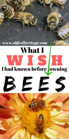 Owning bees and beekeeping is so wonderful but also more than you might think!