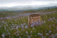 The mounds in Southwest Washington State - Google Search