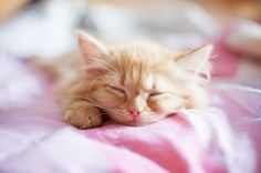 An orange kitten sleeping on a pink sheet.