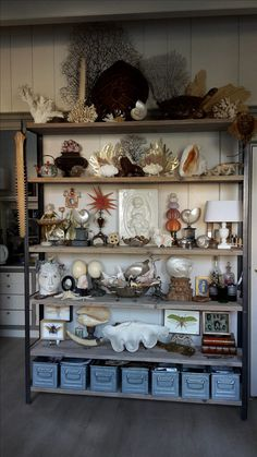 Shell Display, Art Shed, Cabinet Of Curiosities, Seaside Decor, Beautiful Interior Design, Shell Art, Displaying Collections, Bohemian Decor, Interior Styling