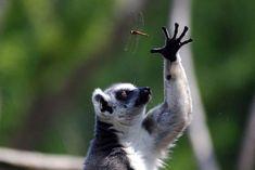 【画像】美しい!珍しい!動物たちの決定的瞬間を集めた写真30枚
