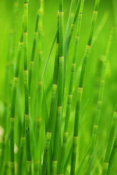 Green Reed Grass by Pink Sherbet Photography