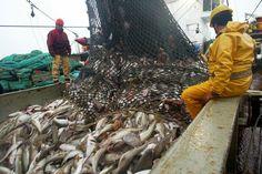 Ocean destruction