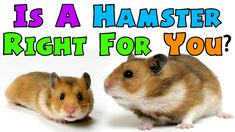 IS A HAMSTER RIGHT FOR YOU?