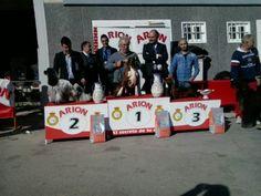 """II Concurso Nacional Canino organizado por la Sociedad Canina de Castilla la Mancha, Recas (Toledo), Febrero 2014. El mejor perro del concurso fue un bóxer criado por Javier Aguado del afijo """"de Mayrit"""". #Recas #concursocanino"""