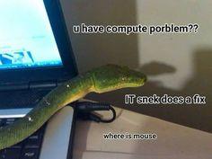 IT snake
