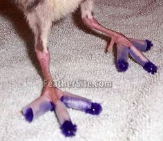 curled toes can be straightened with splints if done in the first few days of life. Use pipecleaners and tape.