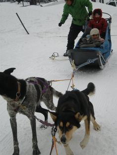 Sweet Obama and Luella- getting ready for a run on Mt. Bachelor.