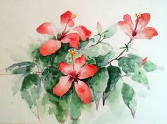 Hibiscus. Watercolor