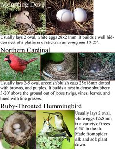 Wild Birds Unlimited: Common Backyard Bird Nest Identification