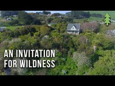 Thriving 23-Year-Old Permaculture Food Forest - An Invitation for Wildness - YouTube