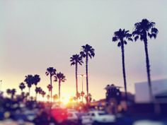 love me some Cali palm trees