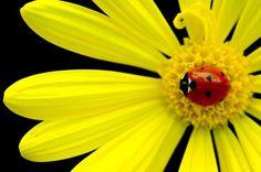 Belleza en amarillo...