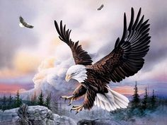 Full Square Round DIY Diamond Painting eagle Mosaic Diamond Embroidery Cross Stitch Christmas Gift Decorations For Home Eagle Wallpaper, Artistic Wallpaper, Painting Wallpaper, The Eagles, Bold Eagle, Eagle Drawing, Eagle Painting, Eagle Pictures, Eagle Art
