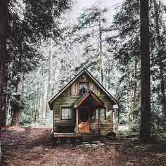 Life in the woods and tiny houses is just better.  #hickoryandbirch #loveyourhome #tinyhouse #tinyhousenation #cabin #cabins #cabineer #cabinlife #cabinfever #cabinlove #woods #woodsy #life #lifestyle #house #design #tinycabin #mountain #mountains #forest #forests #inspired #rural #rurallife #ruralliving #ruralamerica #liveamerican #inspiration by hickoryandbirch