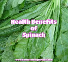 Health Benefits of Spinach!  More info here: http://homesteadingsurvival.com/health-benefits-of-spinach/