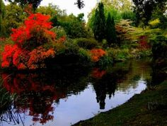 A Scene From Queen Mary's Gardens, Regent's Park, London, England