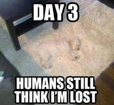 Check out: Animal Memes - Still lost. One of our funny daily memes selection. We add new funny memes everyday! Bookmark us today and enjoy some slapstick entertainment! Cute Animal Memes, Funny Animal Quotes, Animal Jokes, Funny Animal Pictures, Cute Funny Animals, Cute Baby Animals, Funny Cute, Animal Captions, Dog Quotes