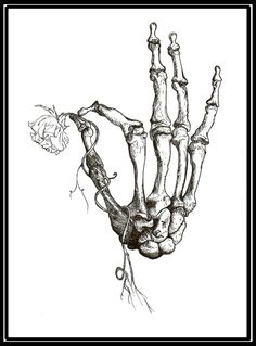 ink drawing /// bones and anatomy