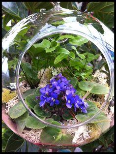 Miniature african violet in terrarium ball