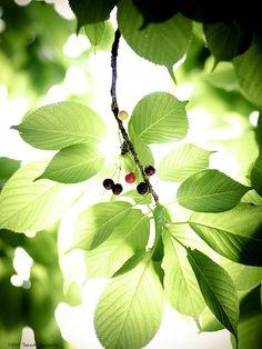 Green light #green #leaves #plant