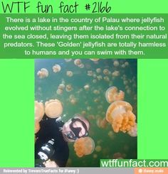 WTF Fun Facts is updated daily with interesting & funny random facts. We post about health, celebs/people, places, animals, history information and much more. New facts all day - every day! Wtf Fun Facts, True Facts, Funny Facts, Random Facts, Crazy Facts, Random Stuff, The More You Know, Good To Know, All I Ever Wanted