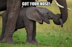 Got your nose!