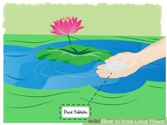 Image titled Grow Lotus Flower Step 19