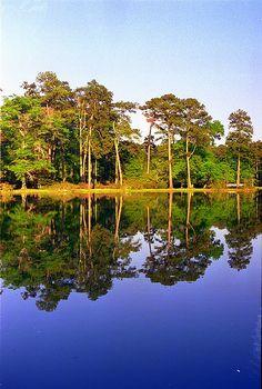 Zemurray Gardens, Louisiana (before Katrina)