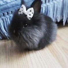 Little Black Bunny
