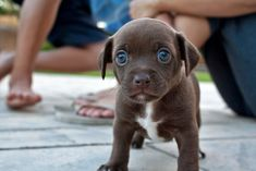 And this teeny little guy who has the cutest eyes in the world. | 42 Of The Most Important Puppies Of All Time