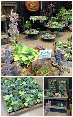 Western-Independant-Greenhouses.jpg 768×1229 pikseliä