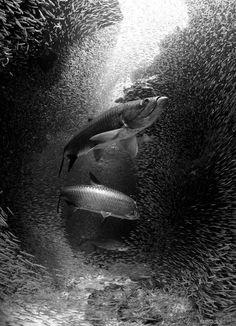 Magnificent Underwater Photography | Abduzeedo | Graphic Design Inspiration and Photoshop Tutorials