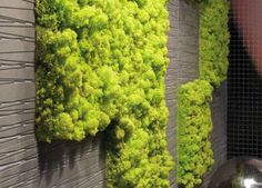 Moss tiles for vertical gardening inside