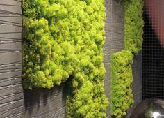 Moss tiles for vertical gardening inside