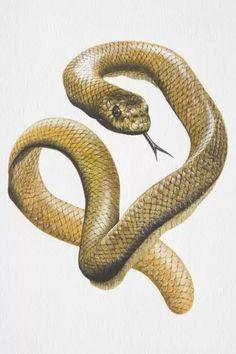 Snake Drawing, Snake Art, Fine Art Prints, Framed Prints, Canvas Prints, Sea Snake, Thing 1, Pics Art, Colour Images