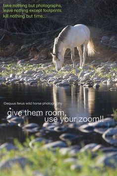 Please don't stress out the wild horses, keep your distance.  #wildhorses, #srwh, #savewildhorses