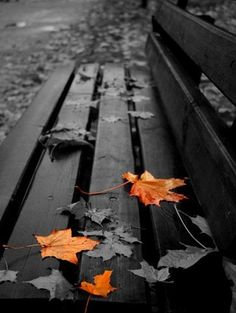 leaves - park bench - black and white with color #leaves