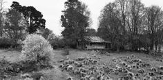Old homestead Nimmitabel NSW