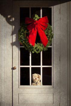 ...these photos of little doggie faces peekin' out of front doors just melt my heart...via octobermoon