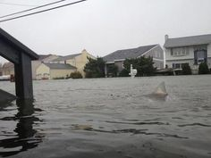 The golden rule: if somewhere has become flooded, you must add sharks. | 22 Viral Pictures That Were Actually Fake