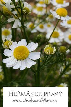 Gardens, Plants, Garden, Flora, Plant, Garden Types, Tuin, House Gardens, Planting