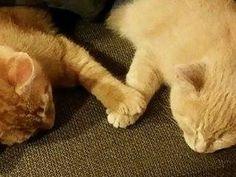 手をつないで寝る子猫たち02