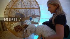 UK: Cultivated canines lap up London culture at world's first art show f...