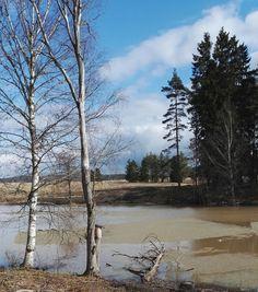 Blogi  OMAISAPU.fi      : Petteri Saario luonnon puolesta