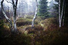 Birchfire. by ~immugraah on deviantART