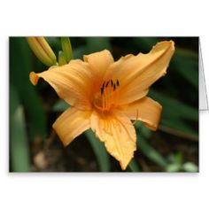 Lily Greeting Card. Greeting Card