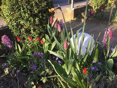 Sunnys Haus: Der Garten im April