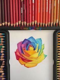 Rainbow Rose Drawing! #art #artsy #artist #artwork #creative #drawing #prisma #prismacolor #prismacolorpencils #flower #rainbow #rose #rainbowrose #rainbowrosedrawing #rosedrawing #colourful #pretty #gorgeous #petals #colour #colours